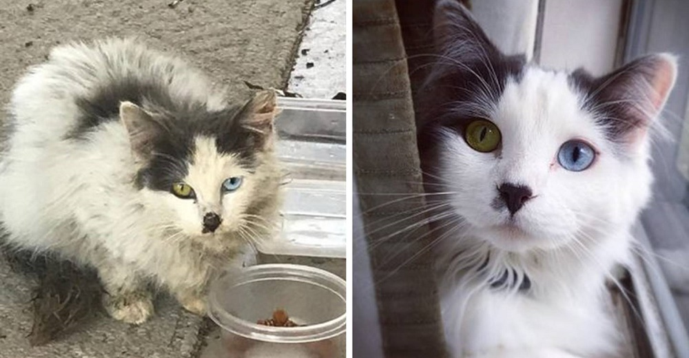 Pareja rescata una gatita callejera con los ojos más hermosos y le da un giro a su vida