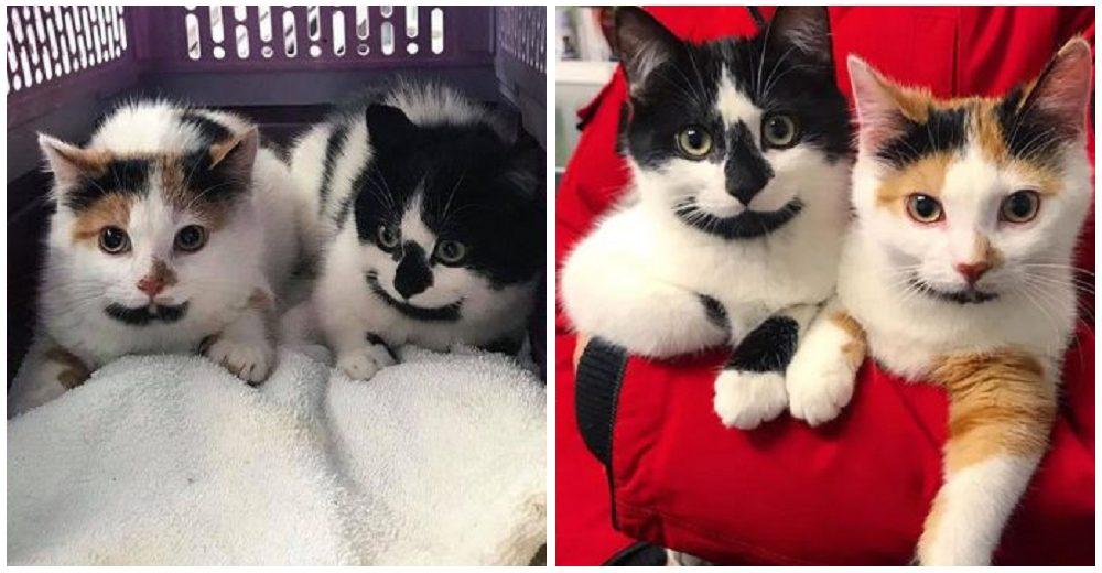 Gatitos con curiosas marcas en sus barbillas son rescatados de la calle y nadie puede separarlos