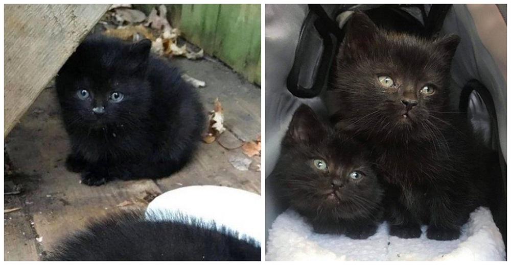 Gatitos abandonados van al jardín de una casa en el invierno y reciben la ayuda que necesitaban