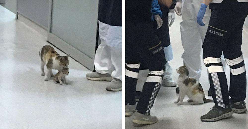 Mamá gata lleva a su pequeño gatito enfermo al hospital confiando en que los médicos lo atiendan