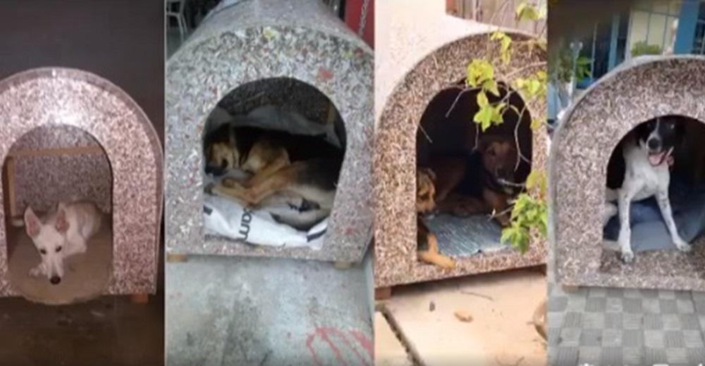 Jóvenes construyen casas para perritos abandonados, ahora se acurrucan calentitos