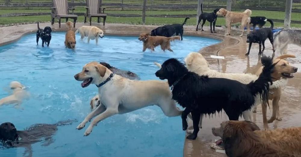 Graban a 39 perritos de una guardería chapoteando felices en la piscina en forma de hueso