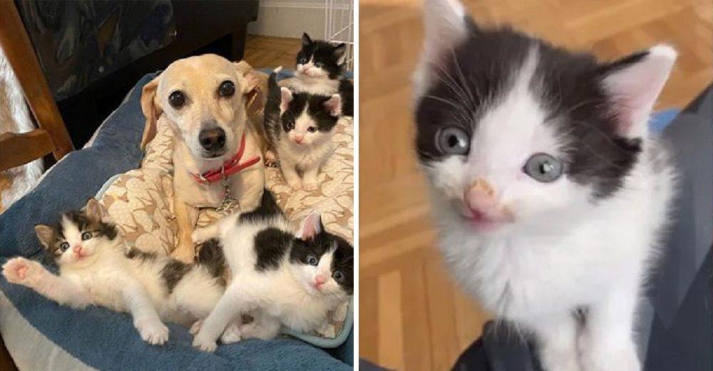 Gatitos son salvados del patio por una mujer y su perrita le pidió que la dejara cuidarlos